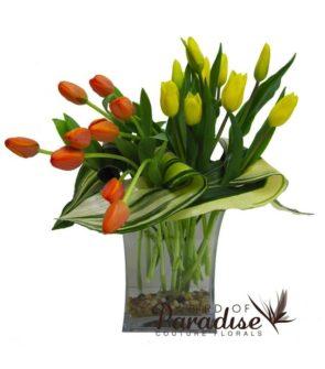 Classical Tulip