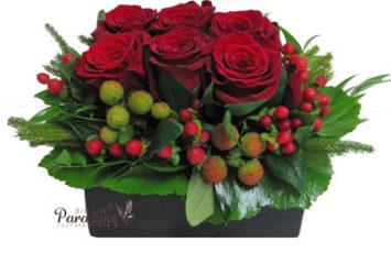 Classical Rose