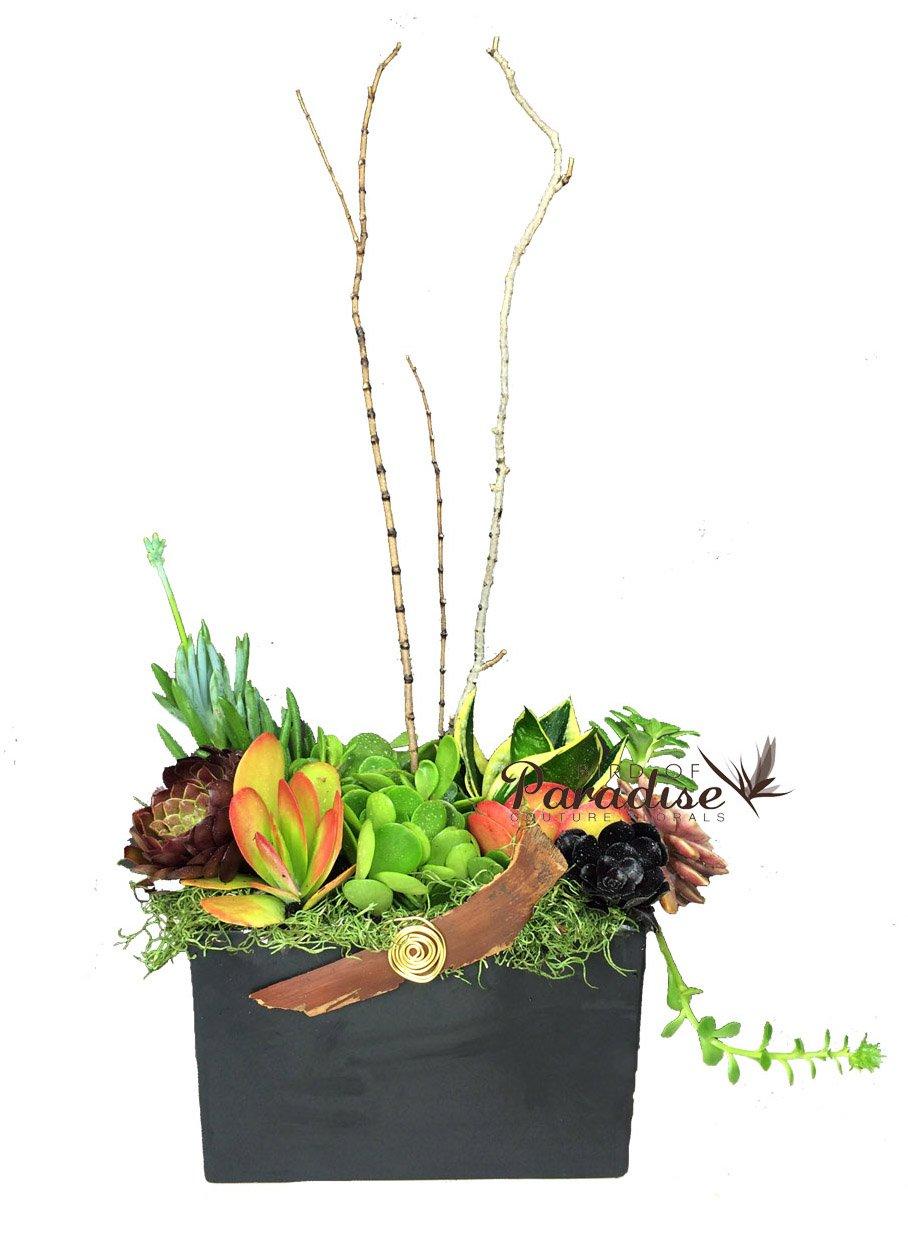 Trendy Succulent